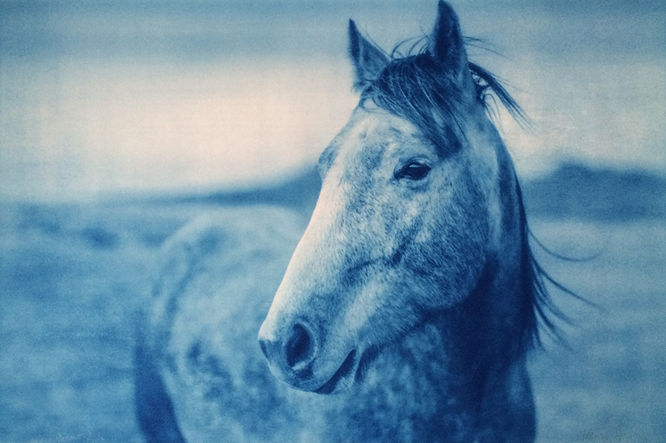 The Enduring Appeal and Extraordinary Breadth of Equine Art