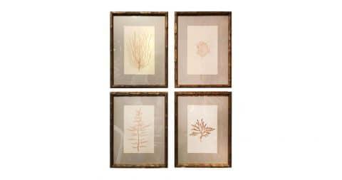 Pressed seaweed specimens, late 19th century