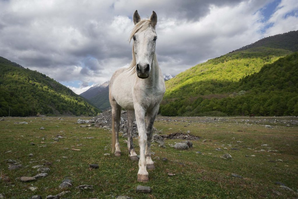 Giles Clarke's Horse: Georgia/Chechen Border, 2015