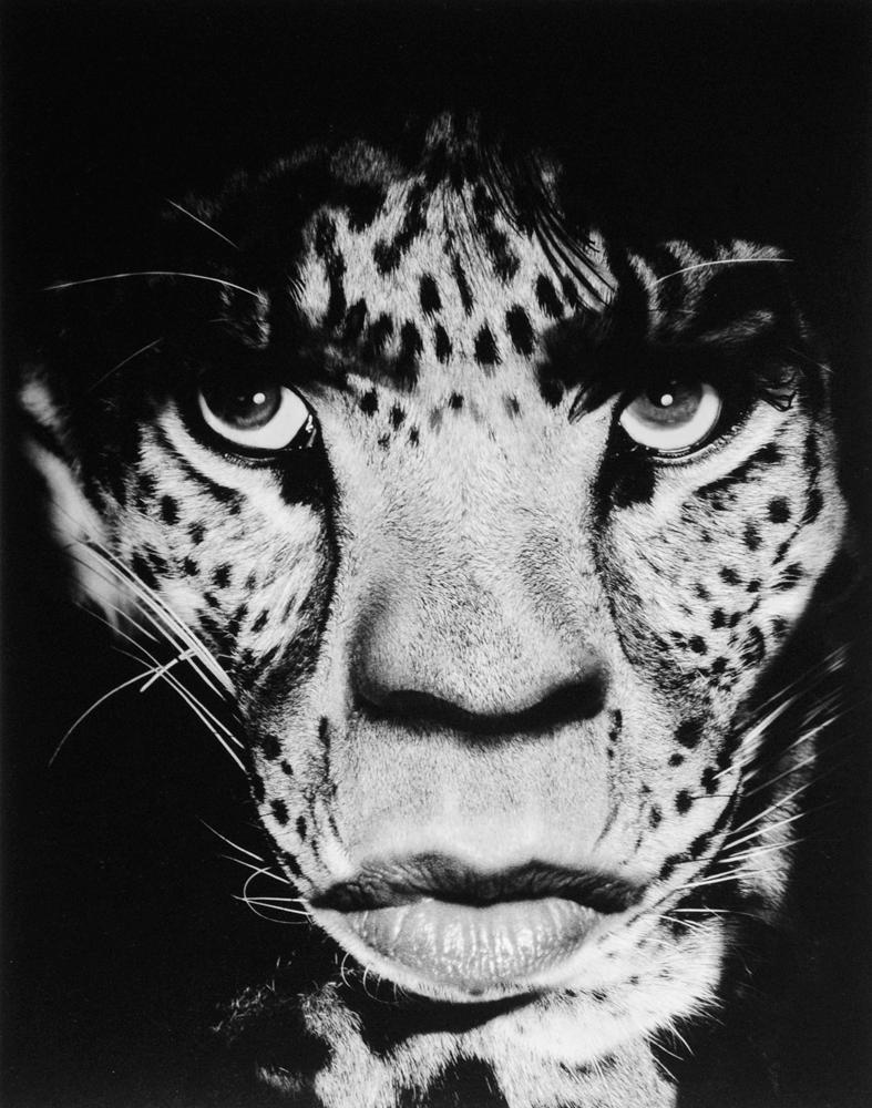 Mick Jagger/Leopard, 1992, by Albert Watson, offered by Christophe Guye Galerie