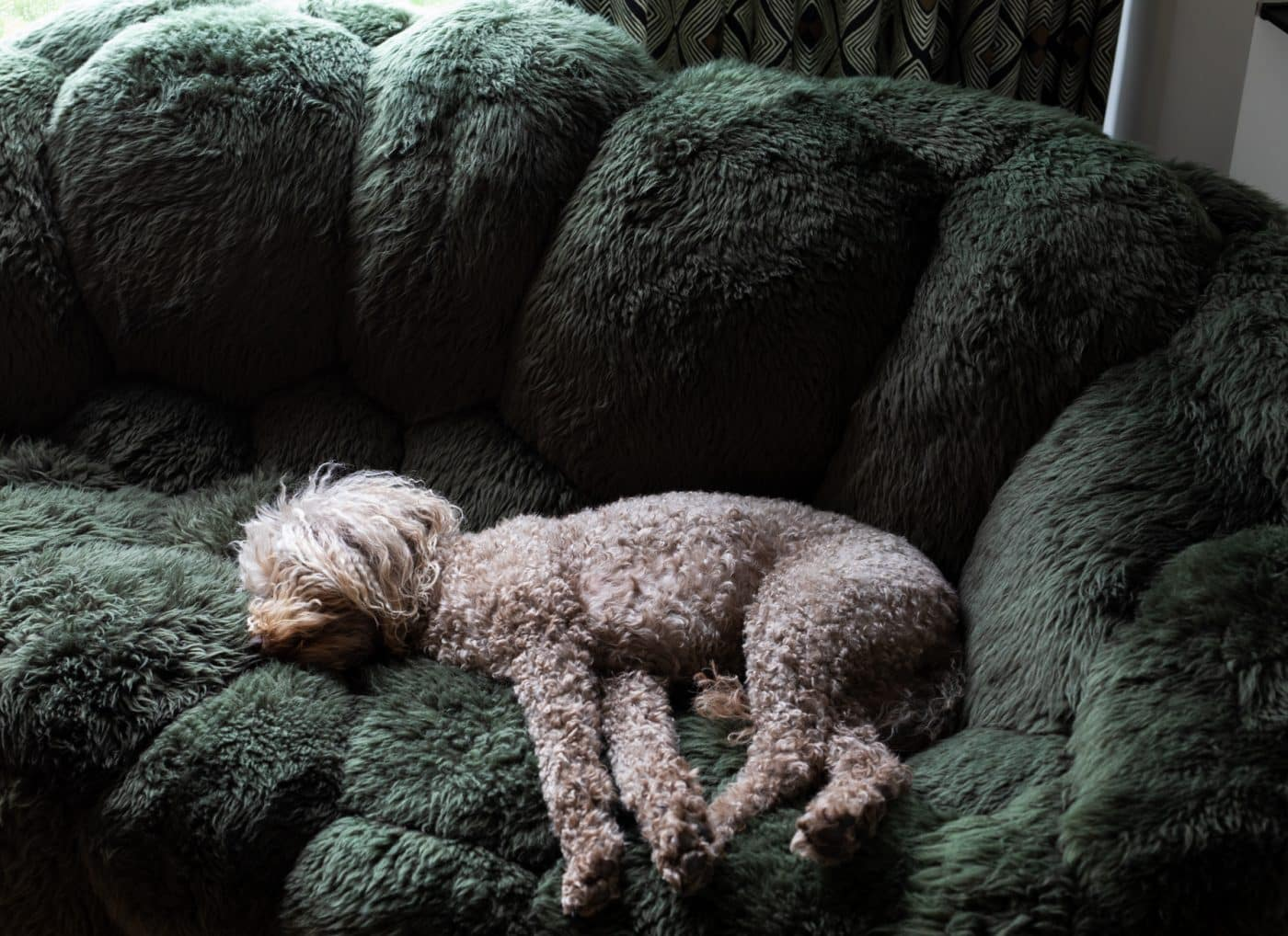 Photo of a dog curled up on a Campana Brothers Bolotas sheep's wool chair
