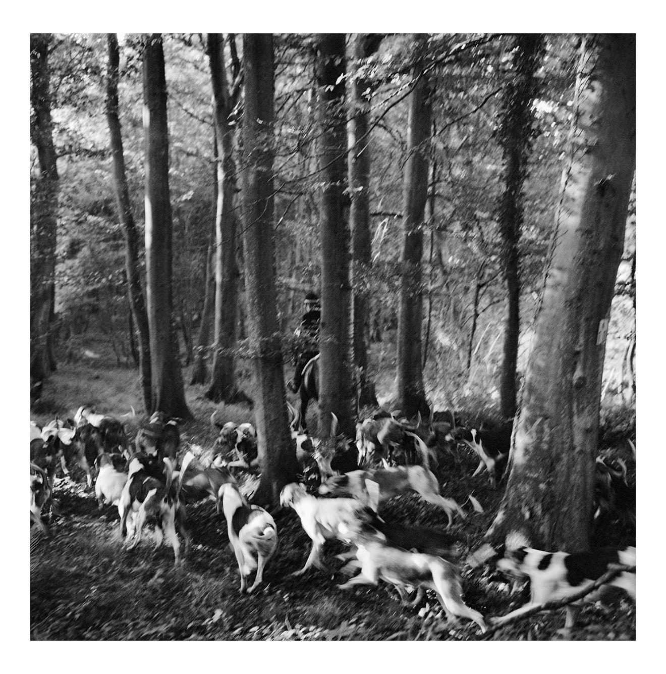 La Chasse au Cerf, Normandie, France, September 1975, 2020, by Jonathan Becker